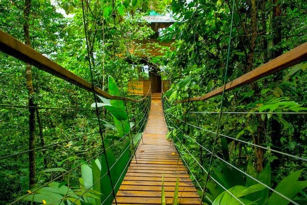 Finca Bellavista - The Real-Life Ewok Village in Costa Rica